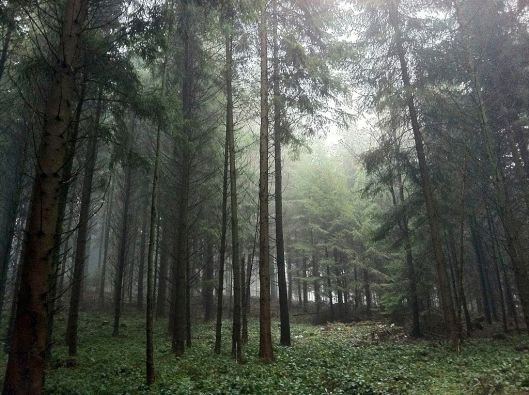 Forest_Schmittewald_between_Roggwil_and_Langenthal_-_panoramio